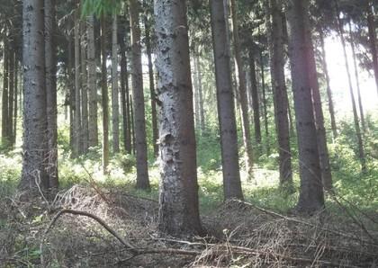 Land- / Forstwirtschaft in 9342 Gurk