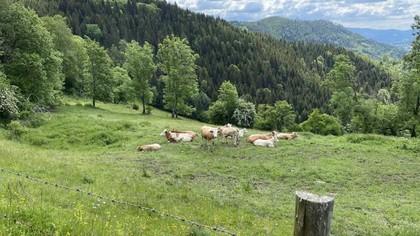 Land- / Forstwirtschaft in 9330 Althofen