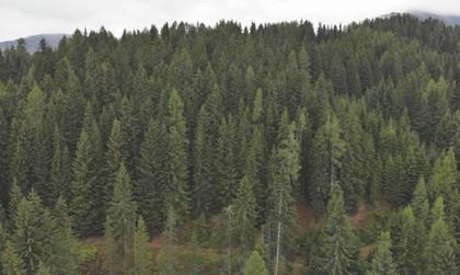 Land- / Forstwirtschaft in 9543 Arriach