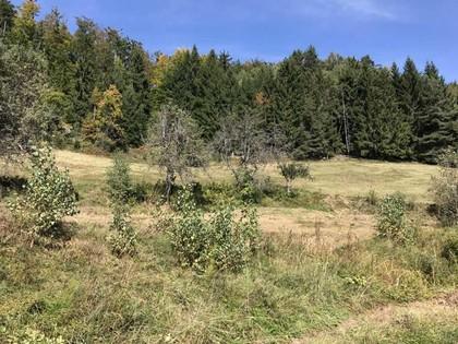 Land- / Forstwirtschaft in 9150 Bleiburg