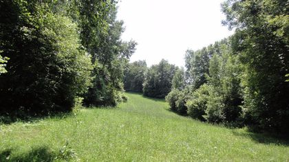 Wald und Weide im Wörtherseeraum - Krumpendorf / Drasing