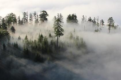 Land- / Forstwirtschaft in 5582 Sankt Michael im Lungau