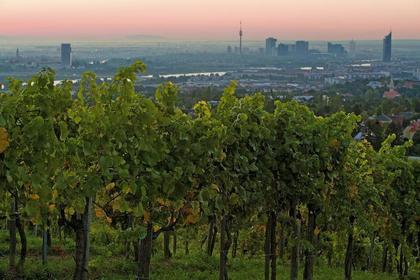 Land- / Forstwirtschaft in 1190 Wien