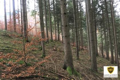 Grundstücke in 4462 Reichraming