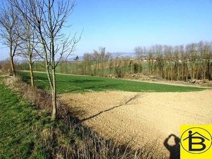 Land- / Forstwirtschaft in 3110 Neidling