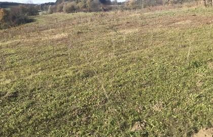 Land- / Forstwirtschaft in 9100 Neudenstein