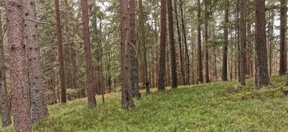 Land- / Forstwirtschaft in 9232 Rosegg