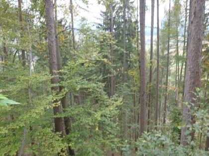 Land- / Forstwirtschaft in 9141 Eberndorf