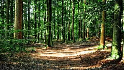 Land- / Forstwirtschaft in 9601 Arnoldstein