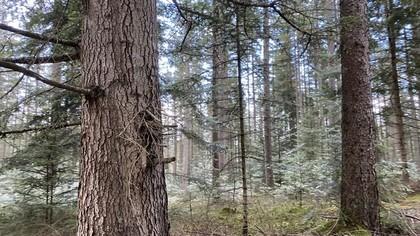 Land- / Forstwirtschaft in 9343 Zweinitz
