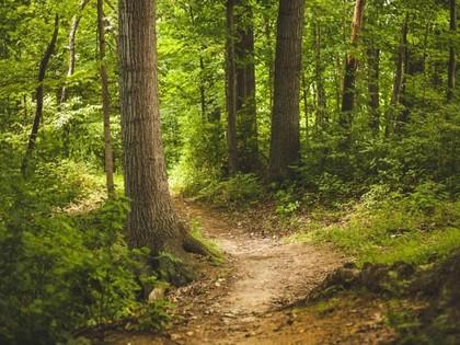 Land- / Forstwirtschaft in 4142 Hofkirchen im Mühlkreis