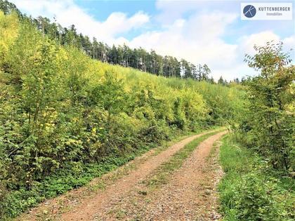 Land- / Forstwirtschaft in 3643 Maria Laach am Jauerling