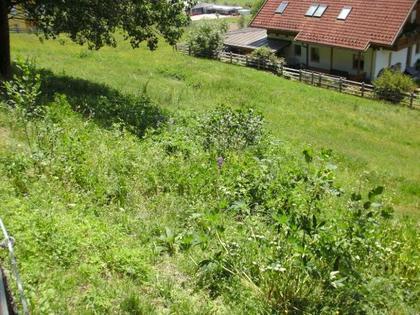 Grundstücke in 9344 Weitensfeld