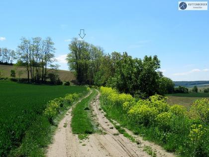 Land- / Forstwirtschaft in 2020 Hollabrunn